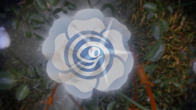 Weiße-Rose-mit-Logo