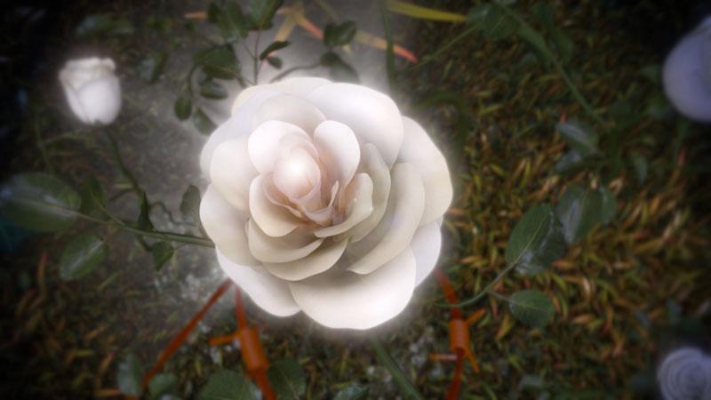 Weiße-Rose